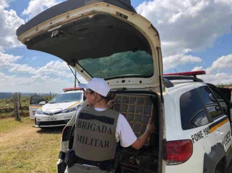 Homem é preso por manter 30 pássaros em cativeiro em Canguçu, RS