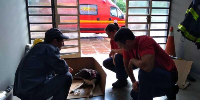 Final feliz para a cadelinha atropelada na manhã desta terça em Ivoti, RS