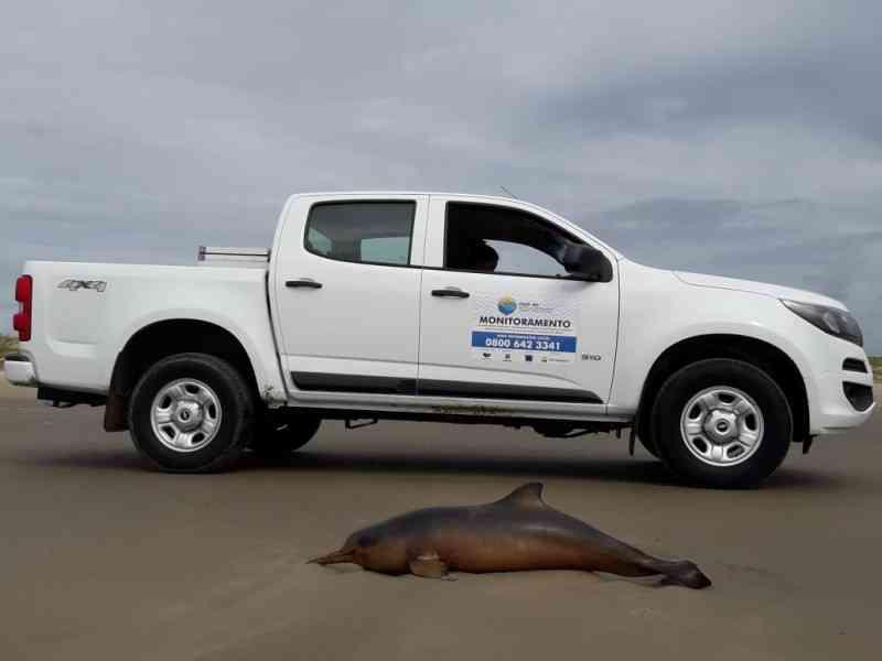 Em 2020, cinco toninhas foram encontradas mortas entre Laguna e Imbituba, SC
