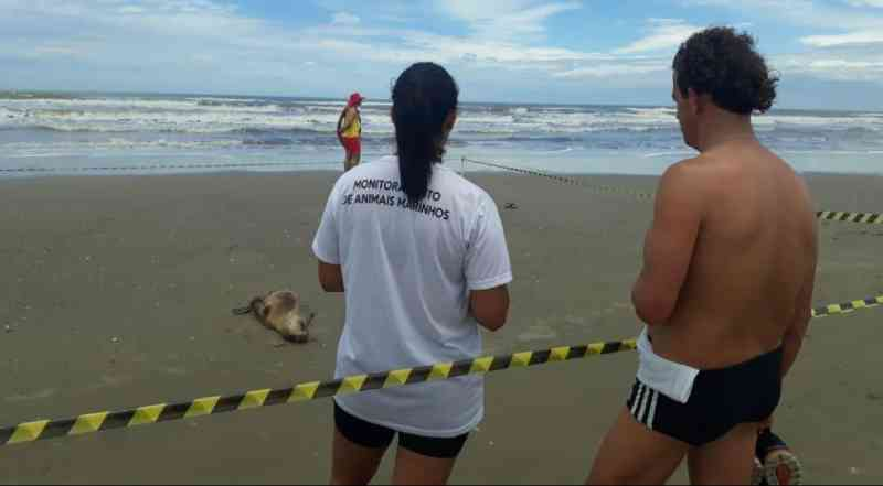 Animais marinhos vítimas de pesca acidental são encontrados em Balneário Arroio do Silva, SC