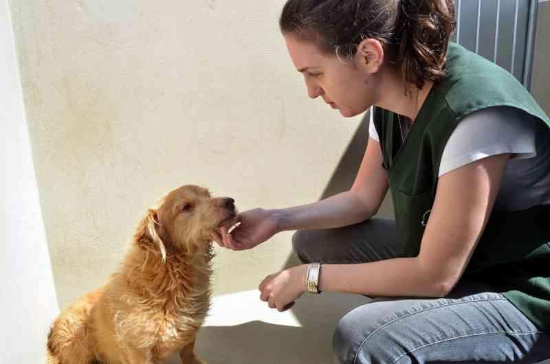 Prefeitura de Blumenau (SC) multa 21 pessoas por maus-tratos a animais
