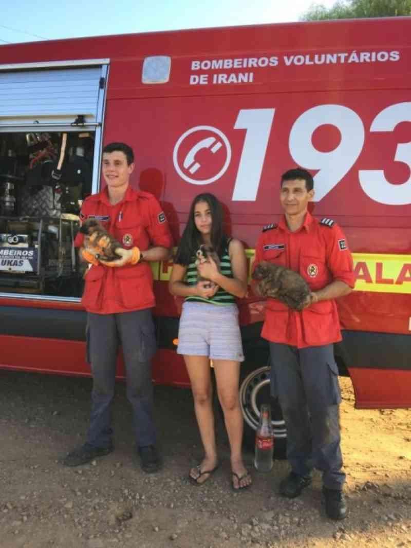 Bombeiros de Irani (SC) fazem resgate de três filhotes de cachorro