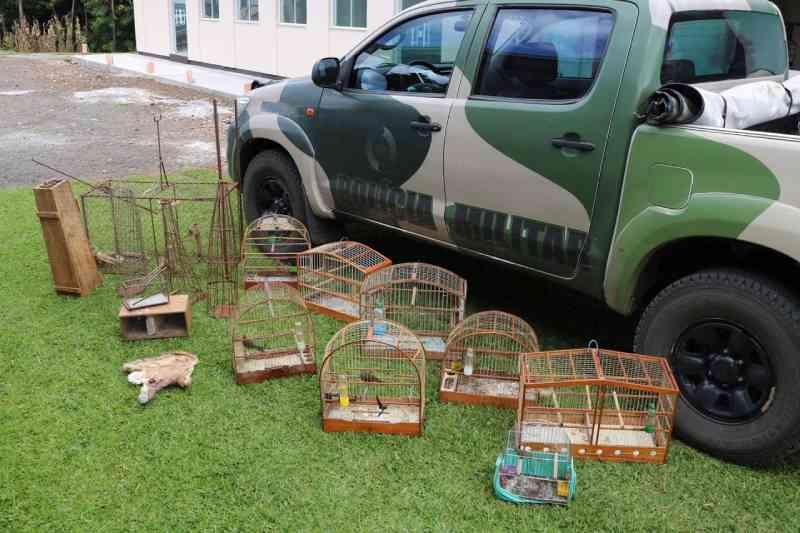 Polícia Ambiental apreende aves silvestres no interior de Joaçaba, SC