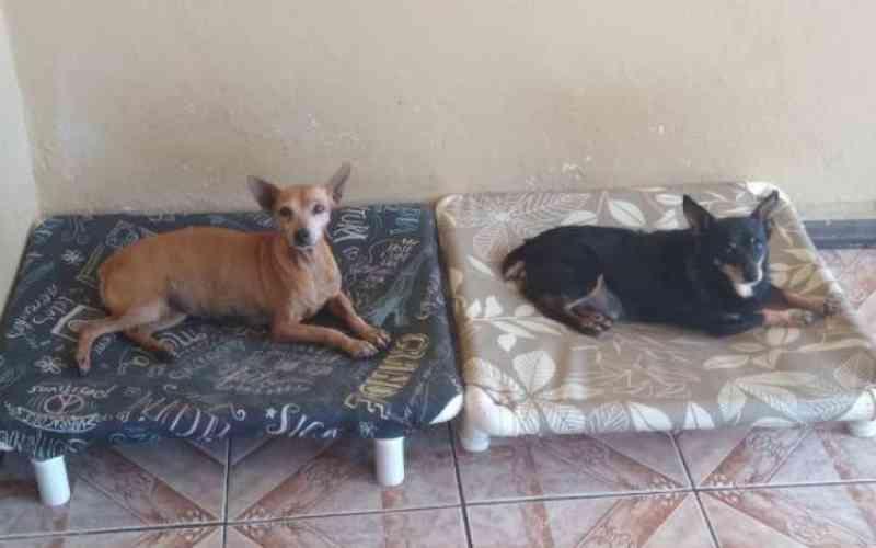 Para evitar aglomeração de pessoas, Abrigo Animal de Joinville (SC) suspende visitas e adoções