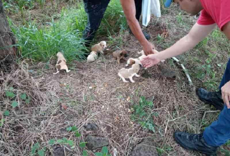 Filhotes de cachorro são encontrados abandonados no Oeste, SC