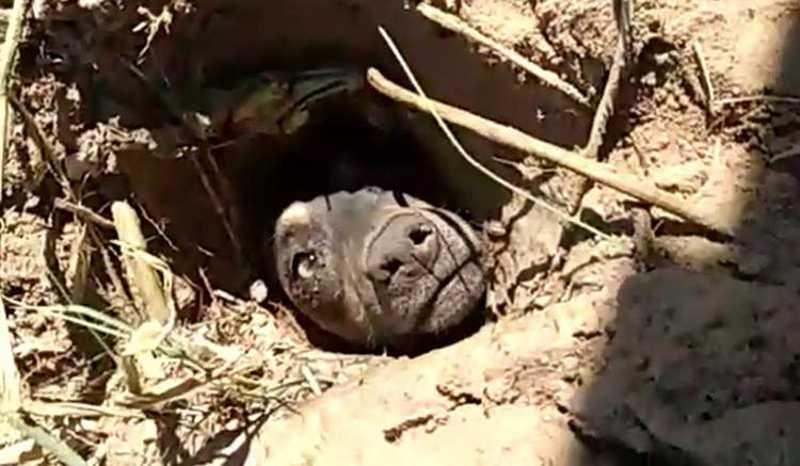 Vídeo: cachorro enterrado vivo no Sul de SC é resgatado e irá para adoção