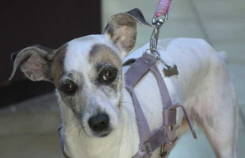 Homem estupra mais uma cadela em Siderópolis, SC