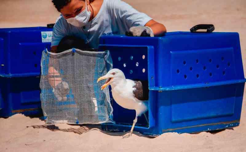 Em dois meses, Gremar realizou 18 solturas de animais reabilitados em Guarujá, SP