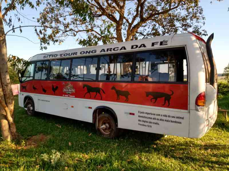Com 800 animais, ONG tenta elevar adoções com excursões