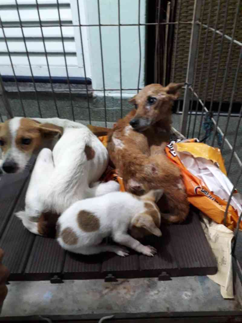 Voluntários se mobilizam por cães vítimas de maus-tratos, em Bauru, SP