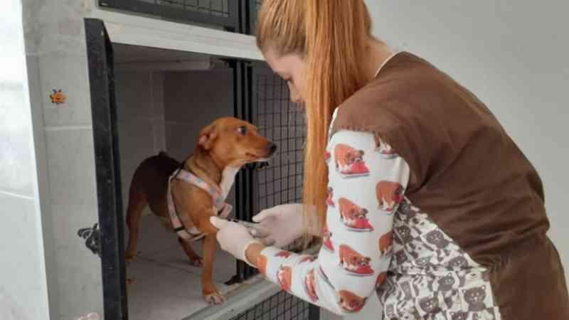 Cães confinados em caixa são resgatados com escolta da PM em Campinas, SP