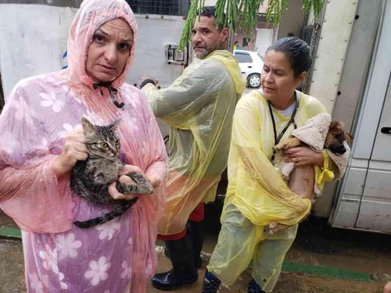 Mais de 50 cães e gatos são resgatados de deslizamentos dos morros em Guarujá, SP