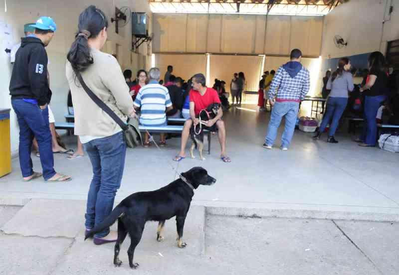 Castração de cães e gatos no Rio Acima, em Jundiaí (SP), recebe inscrições