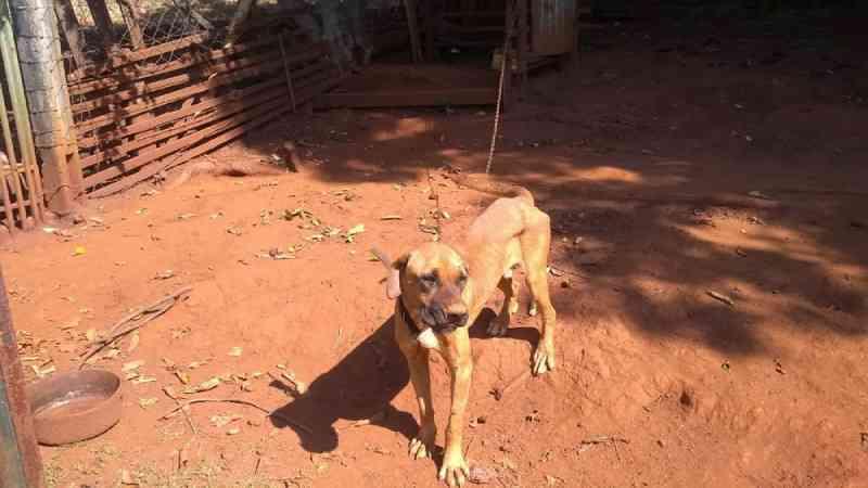 Cachorros são resgatados e tutores de sítio multados em R$ 6 mil por maus-tratos em Limeira, SP