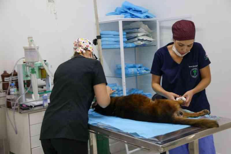 Hospitais veterinários municipais de Osasco (SP) realizaram 17,7 mil consultas no 1º ano do projeto