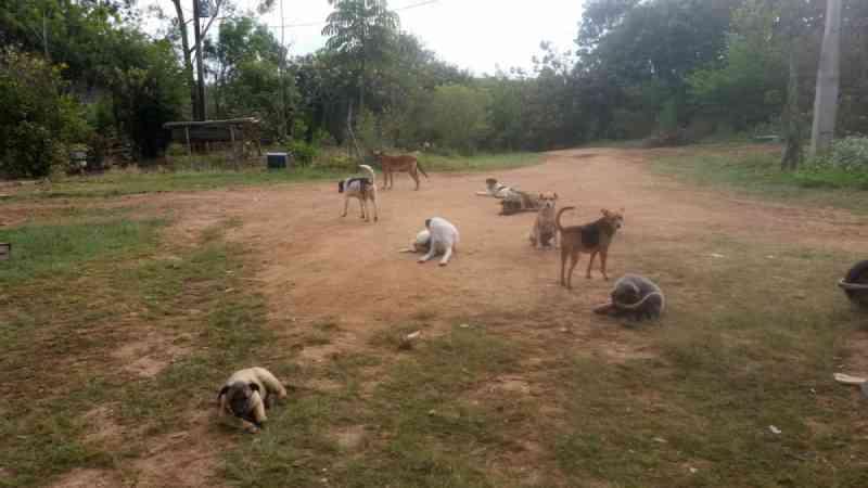 'Maldade sem tamanho', diz tutora de cães mortos a machadadas em estrada do interior de SP