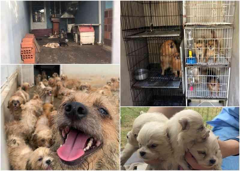 Três canis ilegais são descobertos em Rio Preto (SP) nos primeiros meses de 2020
