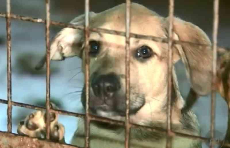 Fila de adoção de animais tem 520 cães e gatos em Araraquara, SP