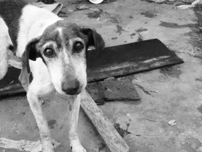 Animais desabrigados após fortes chuvas na Baixada Santista recebem doações