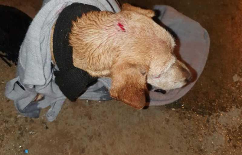 Protetora tirou o próprio casaco pra salvar a cachorrinha