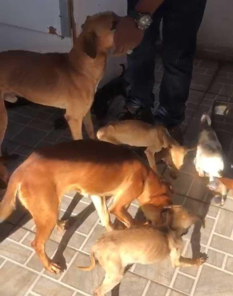 Canibalismo: após denúncia, Guarda resgata cachorros vítimas de maus-tratos em Campinas, SP