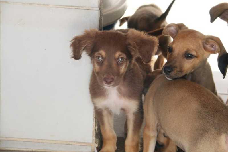 Prefeitura de Caraguatatuba (SP) chama clínicas veterinárias para castração