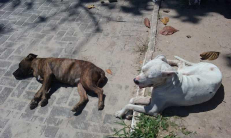 Cães esfaqueados foram encontrados em praia de Guarujá, SP — Foto: Arquivo Pessoal/Elaine Dalsin