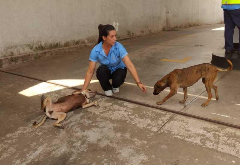 Carol brinca com cães 'adotados' por funcionários e clientes de posto de combustíveis em Limeira — Foto: Arquivo Pessoal