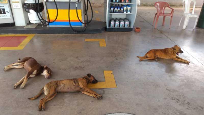 Cães de rua estabeleceram domicílio em posto de Limeira: 'eles comandam tudo ali', diz frentista — Foto: Arquivo Pessoal