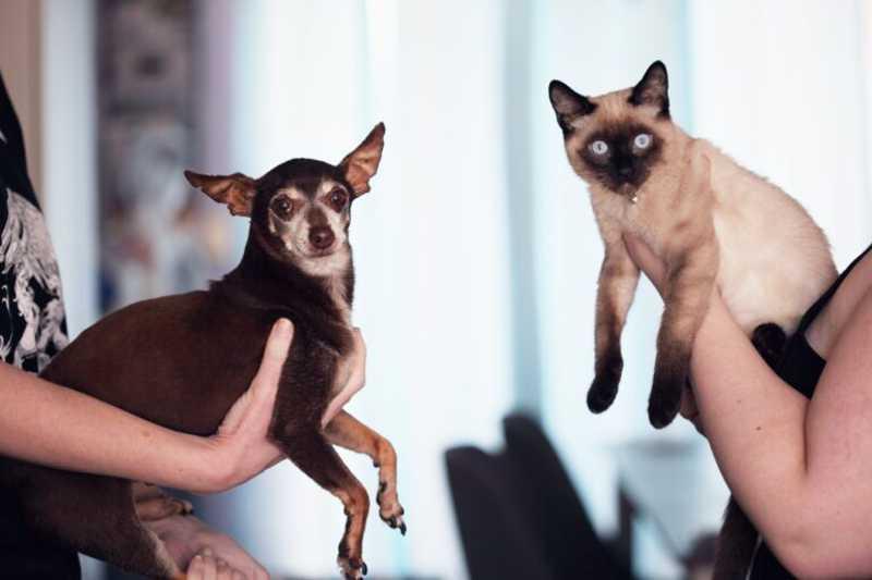 Leitores denunciam abandono de cães e gatos (Foto: Divulgação)