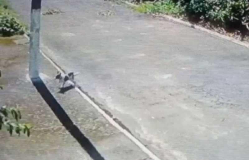 Câmeras de monitoramento flagram cachorro abandonado em Praia Grande — Foto: Arquivo Pessoal