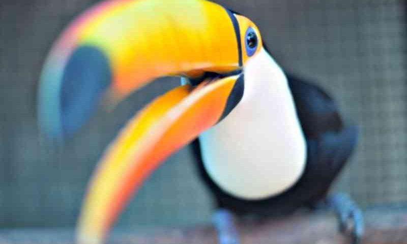 Prefeito de SP sanciona lei que proíbe abertura de novos zoológicos