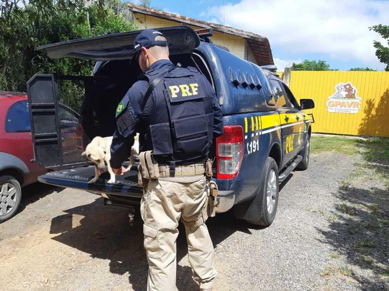 Cachorro abandonado em rodovia é resgatado pela PRF em Registro, SP