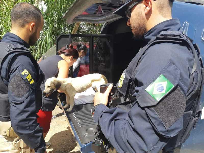 Animal foi encaminhado para um centro de proteção, onde será tratado — Foto: Divulgação/ Polícia Rodoviária Federal