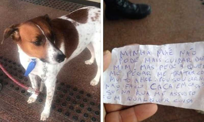 Cachorro foi abandonado em frente a supermercado de Santos (SP) — Foto: Reprodução/ Vivendo em Santos