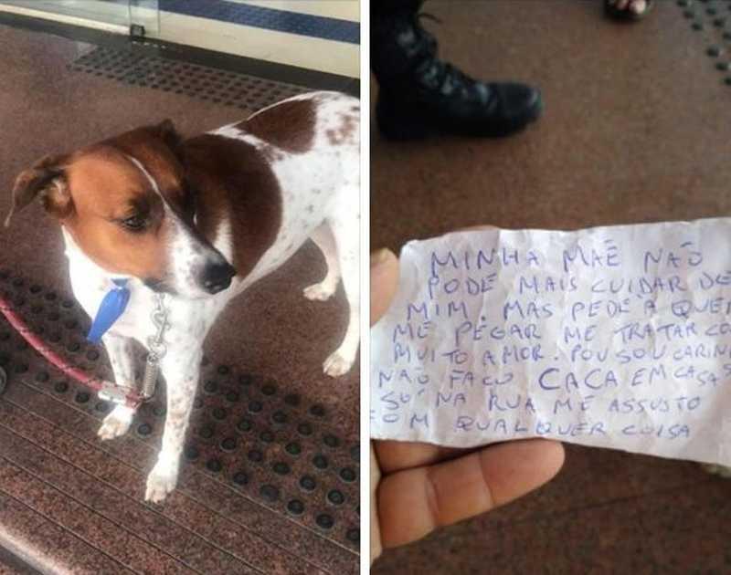 Cão ganha novo lar após ser largado com bilhete: 'tratar com muito amor'