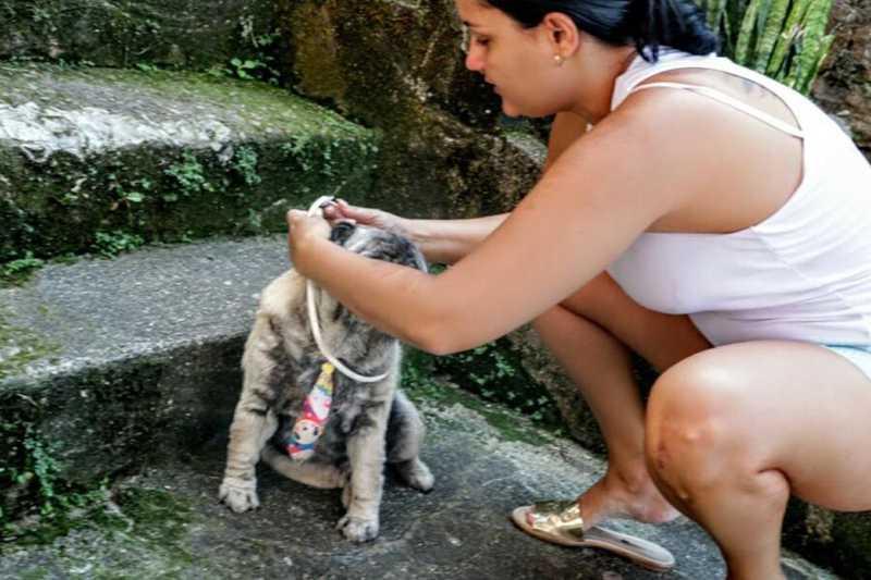 Cães recebem coleiras contra a leishmaniose em Santos, SP