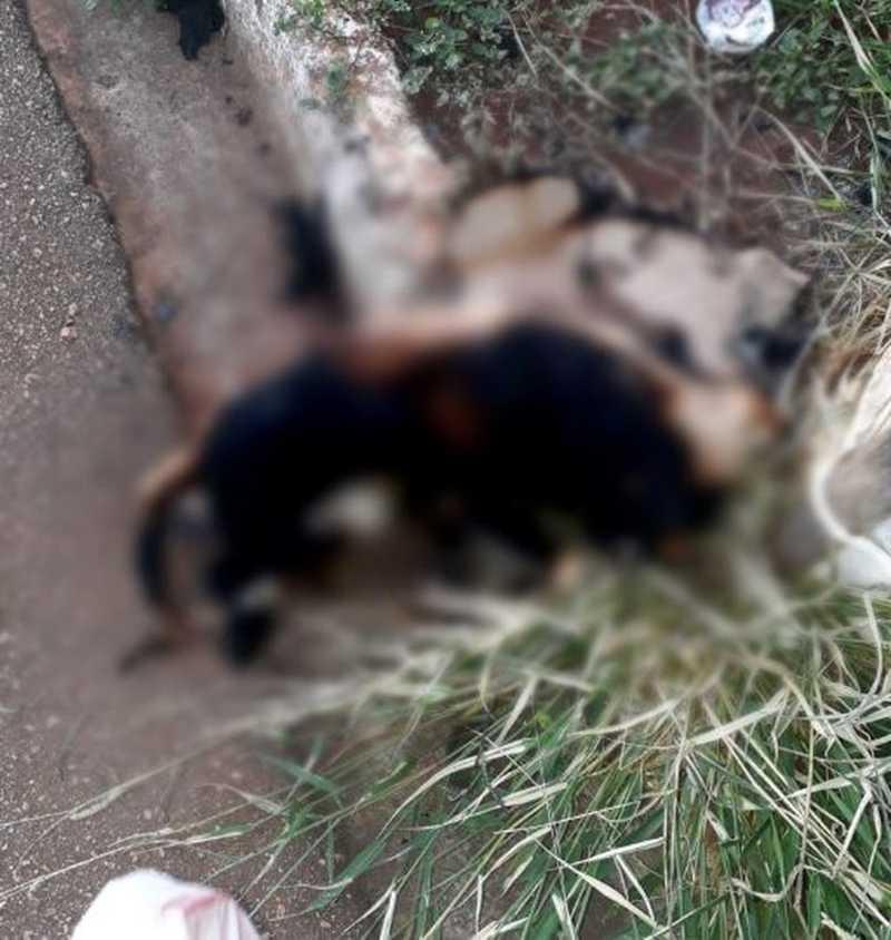 Cachorro é achado queimado em Tatuí — Foto: Arquivo Pessoal