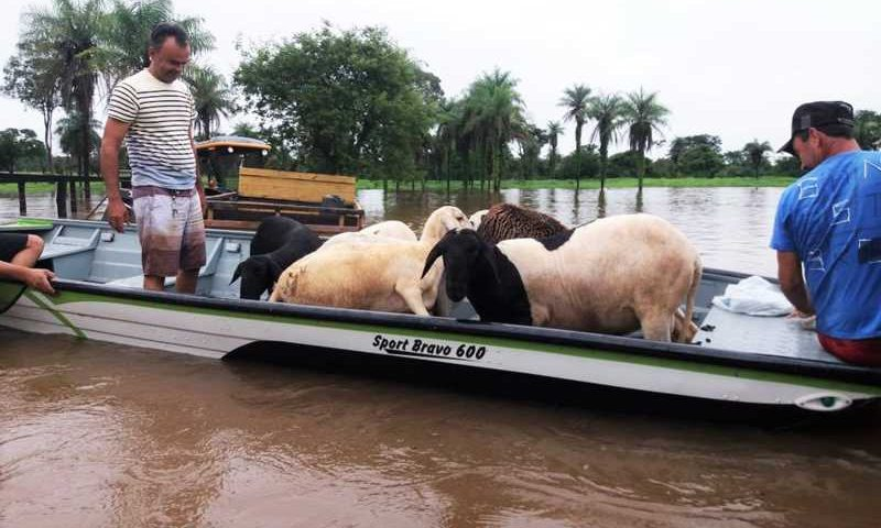 Animais foram retirados da fazenda em barco — Foto: Corpo de Bombeiros/Divulgação