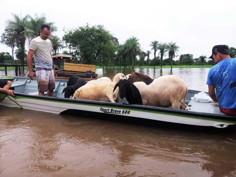 Animais são resgatados de barco pelos Bombeiros após chácara ficar alagada em Araguatins, TO