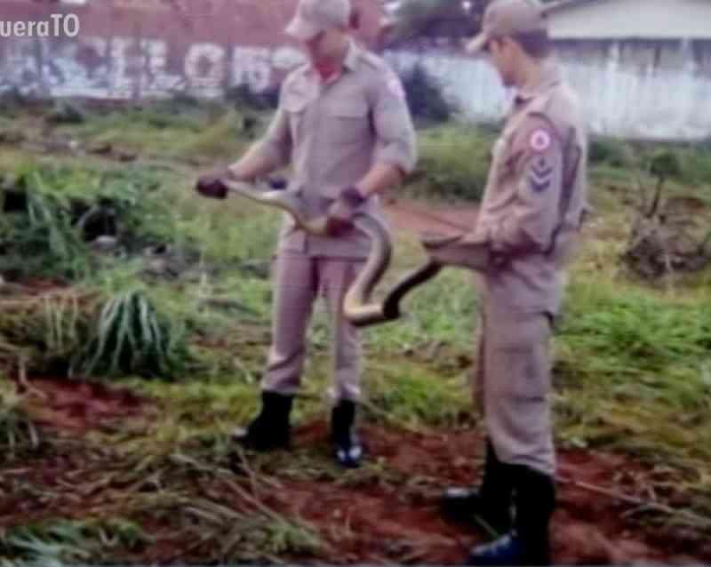 Em dois meses, mais de 40 animais silvestres são capturados no perímetro urbano de Gurupi, TO