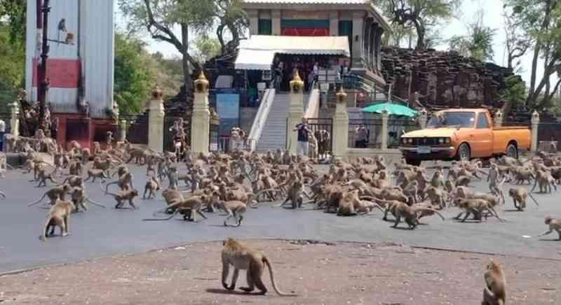 Coronavírus e seca provocam 'guerra de macacos' na Tailândia