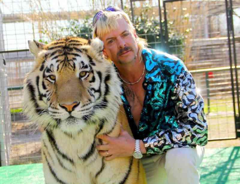 Animais do Zoológico Tiger King eram 'socados, afogados e agredidos com chicotes'