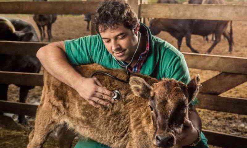 Coronavírus no campo: cães, cavalos e bois não transmitem a doença