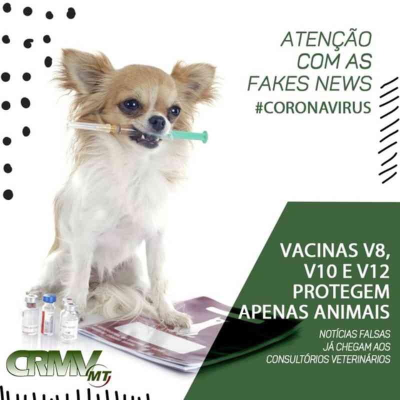 Vacina para cães não previne Covid-19 e não deve ser usada em humanos, diz CRMV-MT após vídeo com informação falsa