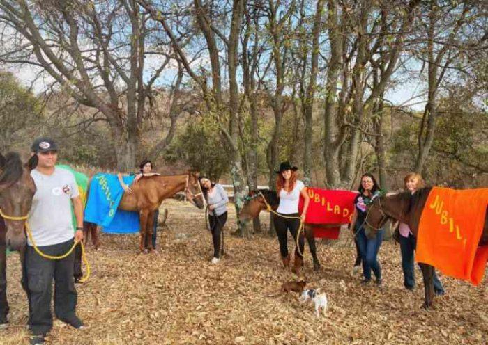 42 cavalos estão libertos das carruagens de Acapulco, México