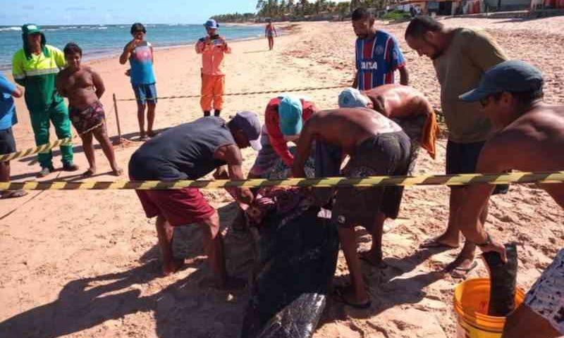 Filhote de baleia é encontrado morto em Camaçari, BA; moradores tiram carne para consumir