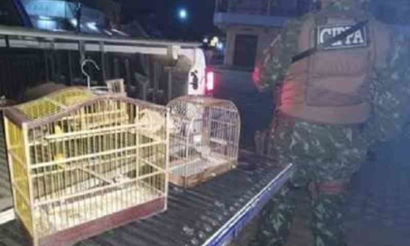 Caçador de animais silvestres é capturado no sul da Bahia; mais dois flagrantes foram registrados