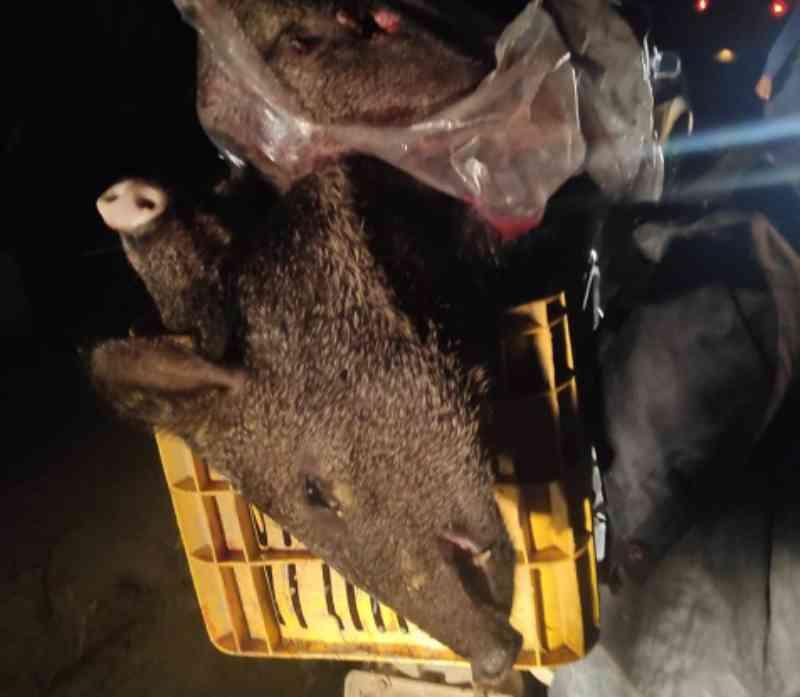 Caça de animais silvestres é o crime ambiental mais comum na região sul da Bahia