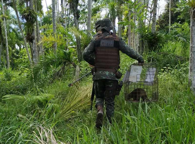 Flagrantes, solturas e resgates ocorreram durante ação da Companhia Independente de Polícia de Proteção Ambiental (CIPPA) em Eunápolis, Ilhéus e Santa Cruz Cabrália durante o final de semana. — Foto: SSP-BA / Divulgação